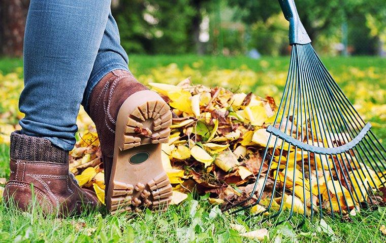 fall yard cleanup raking leaves