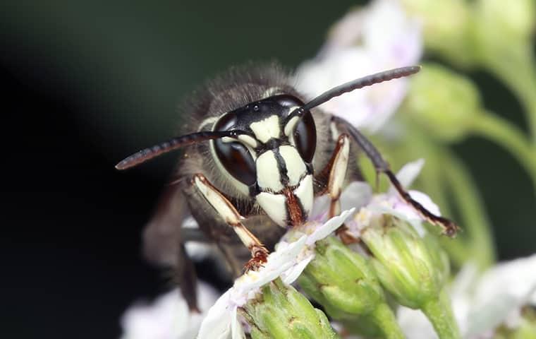 a hornet on a flower