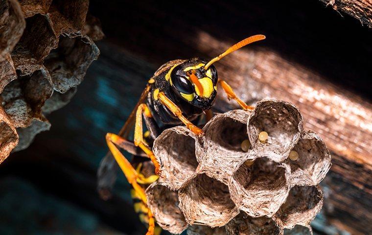 a hornet in a nest