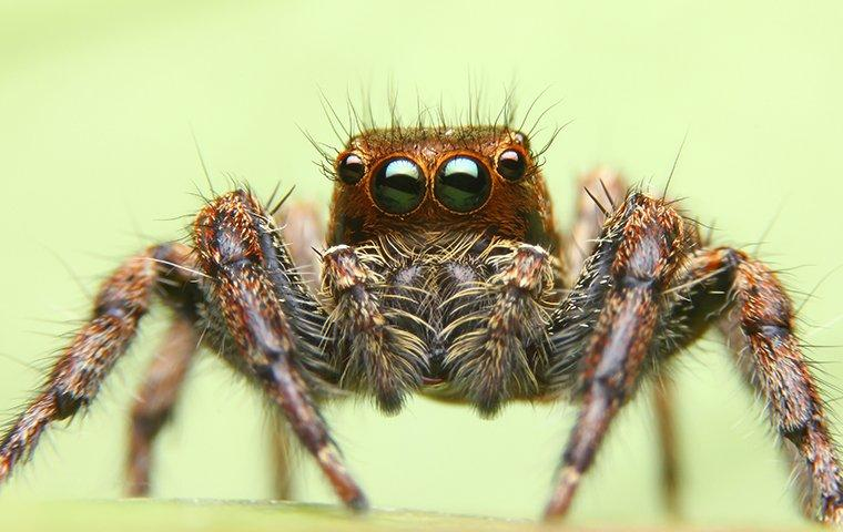 jumping spider in longview