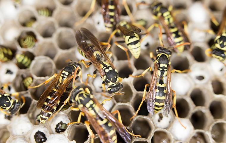 many wasps on a nest