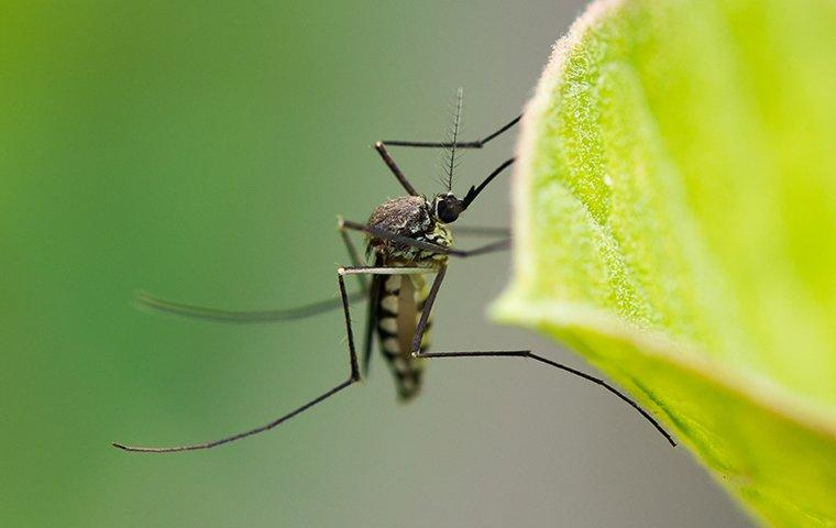 a mosquito landed on a leaf in a garden
