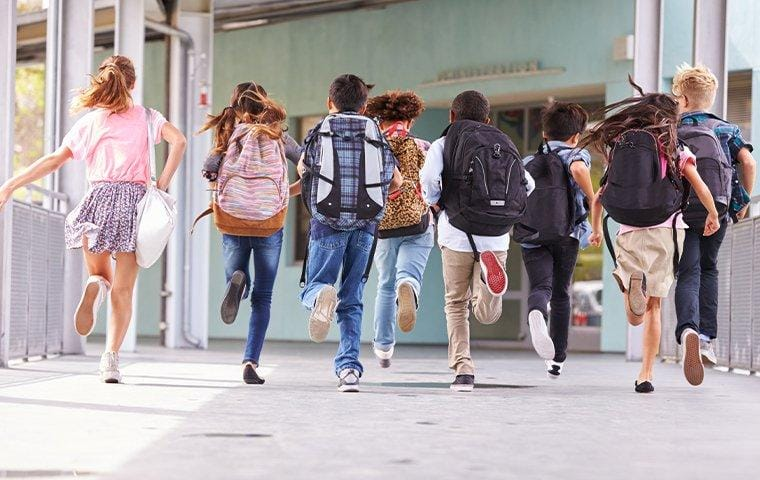 bed bugs spreading on backpacks at school