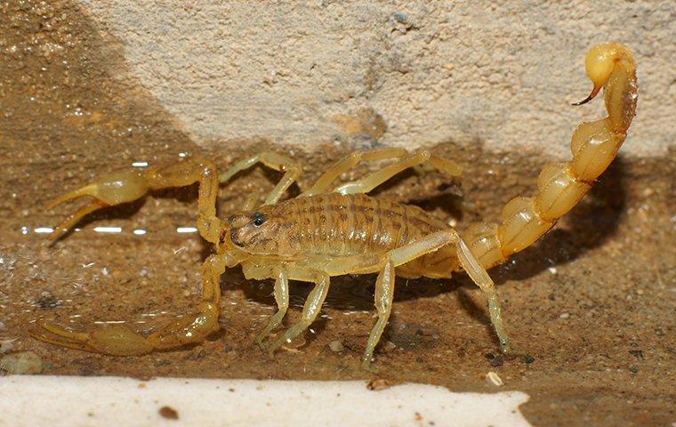 a scorpion crawling in a basement