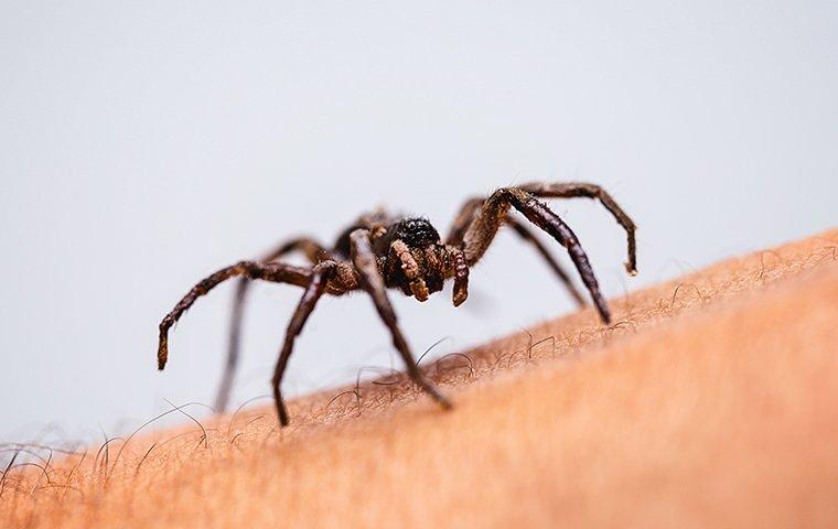 spider crawling on arm