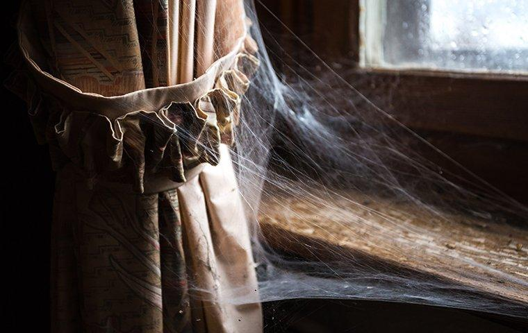 spiderwebs attached to curtain and window