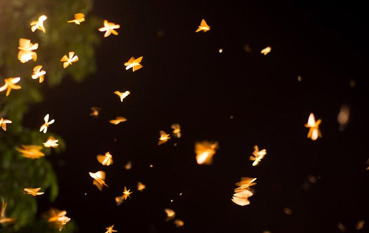 termites swarming at night