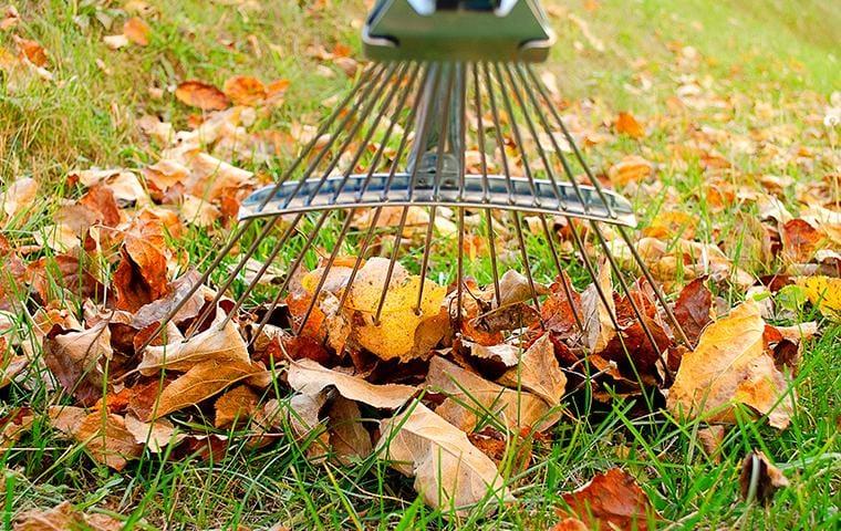 raking leaves in backyard