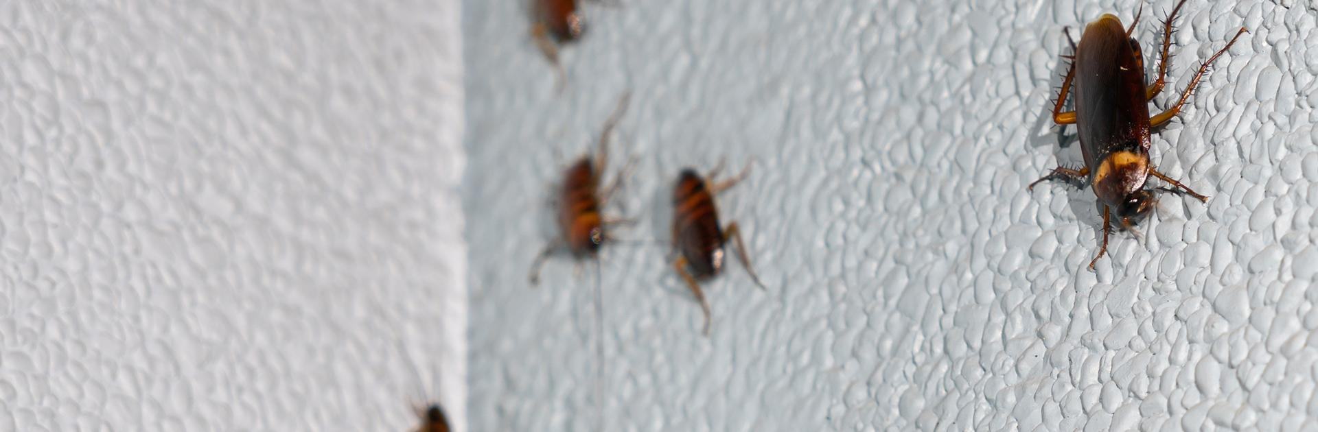 five cockroaches crawling on a bathroom wall