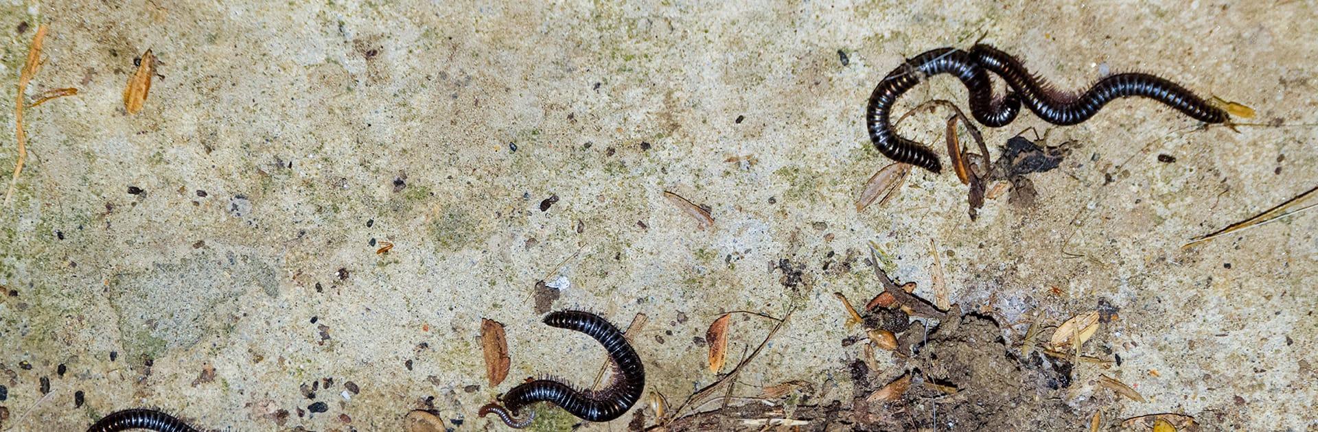 millipedes on garage floor