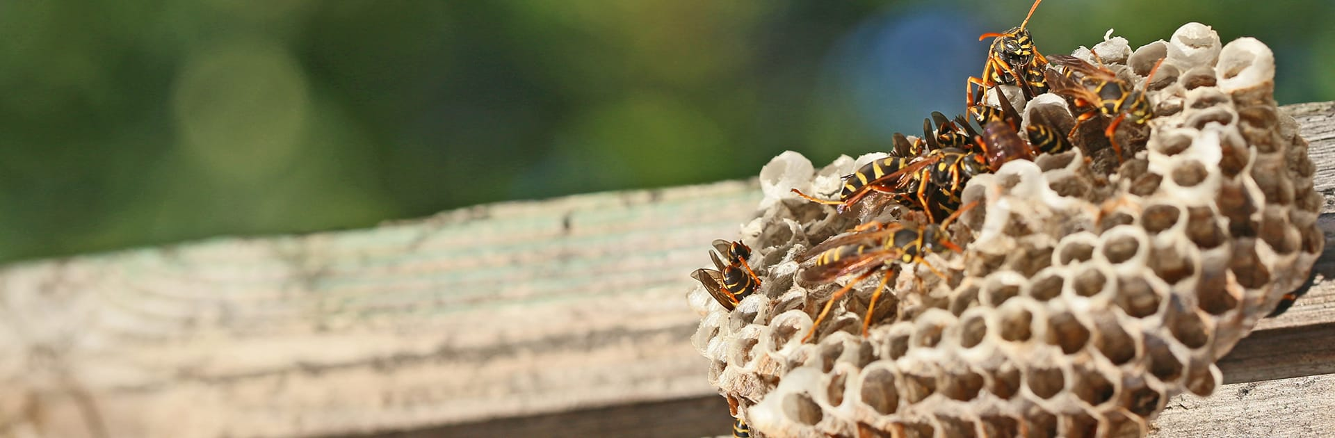 paper wasp nest on porch