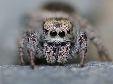 jumping spider on a rock