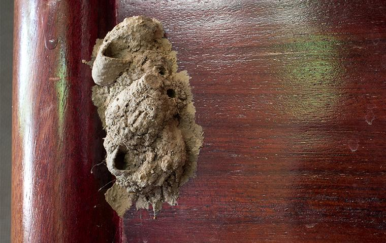 mud dauber nest on outside of building