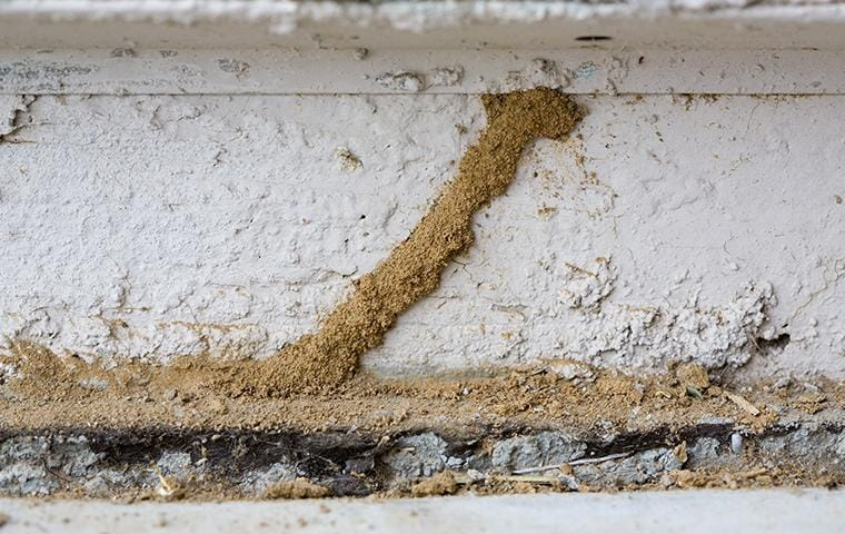 mud tube on the exterior of a house
