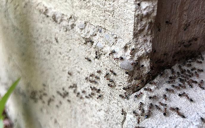 ants collecting on concrete outside of a midlands south carolina home