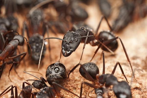 a group of ants making their way into a south carolina home