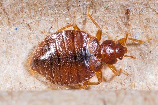 a bed bug infestation in a south carolina school