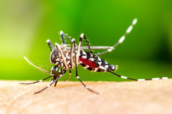 a mosquito biting human skin and spreading disease