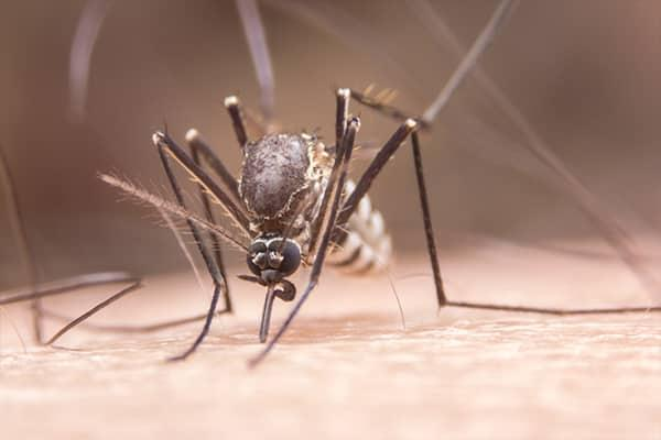 a mosquito crowched down on the arm of a man as it is biting a south carolina resident