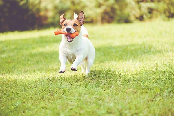 dog playing in backyard in south carolina