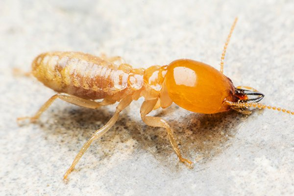 a termite crawling in a house