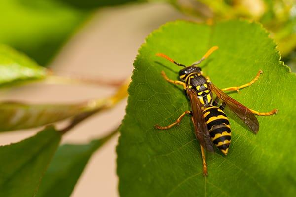 a wasp sitting on leaf outside of a cayce south carolina home