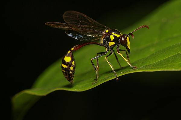 mud dauber resting on a leaf in the yard of a richland area business