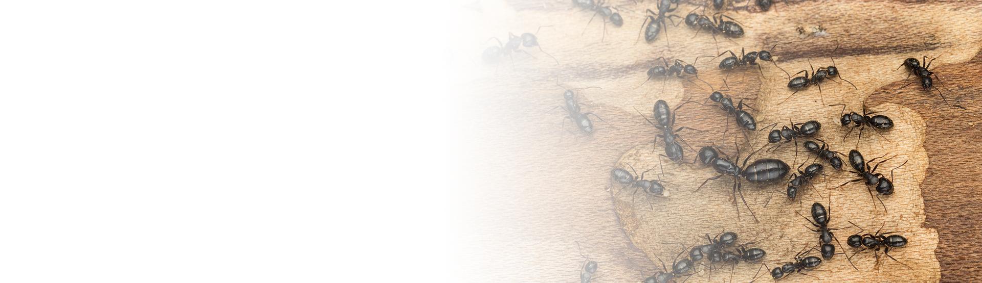 bed bug on a mans skin