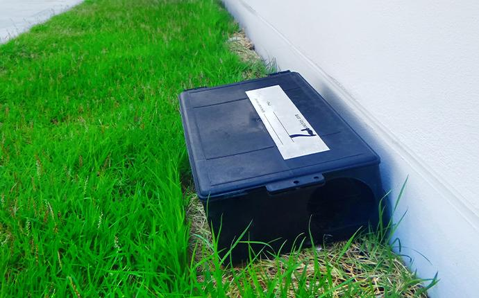 a live rodent trap outside of a midlands home