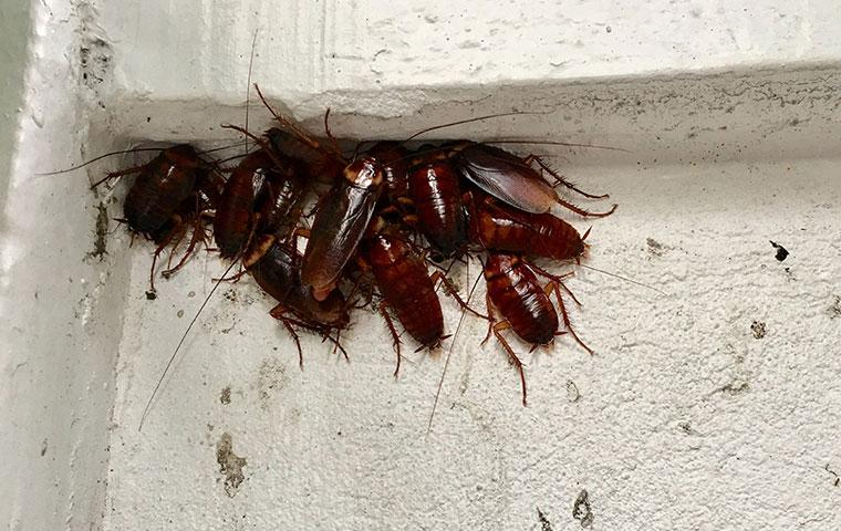 cockroach infestation in a basement