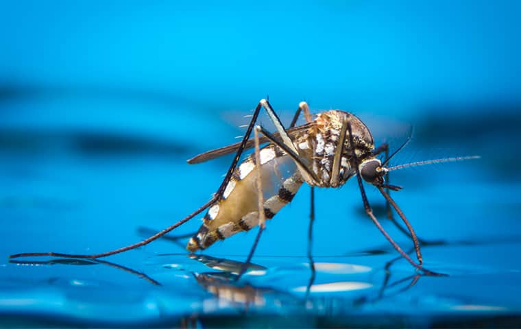 a mosquito standing on water in crestview florida