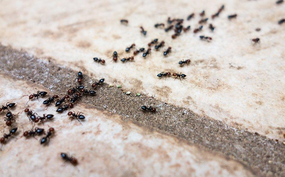 ants on tile floor