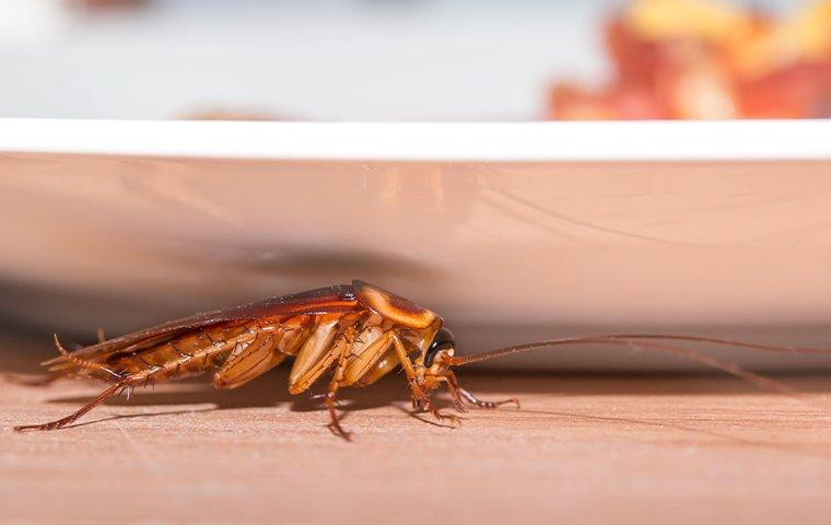 a cockroach crawling on a kitchen table