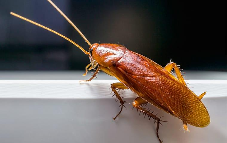 a cockroach crawling on a bowl in a baton rouge louisiana kitchen