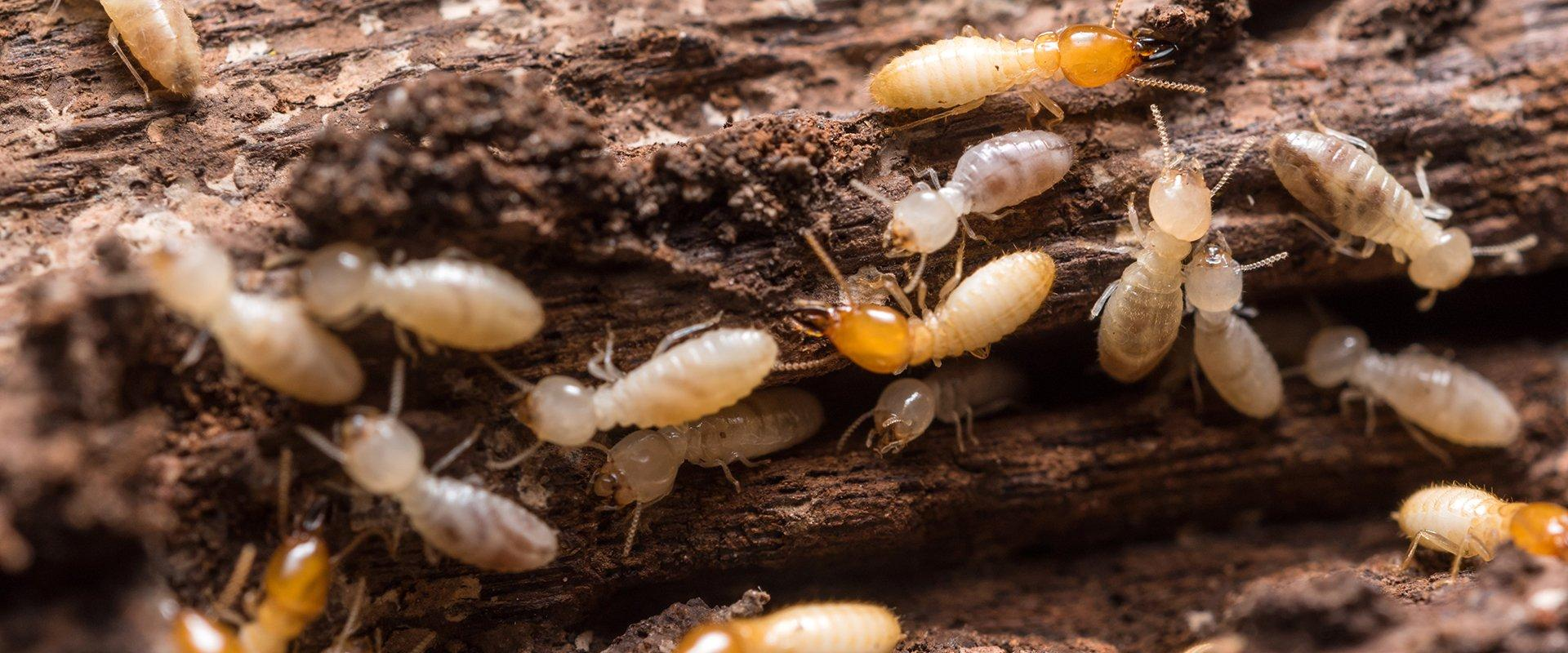 termites outside home