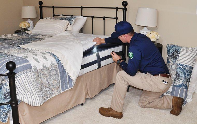 a bed bug expert inspecting a mattress