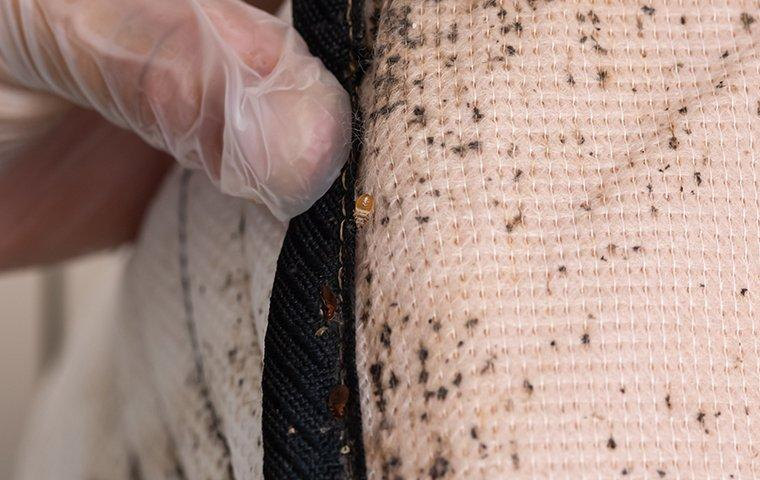 signs of a bed bug infetation on a mattress