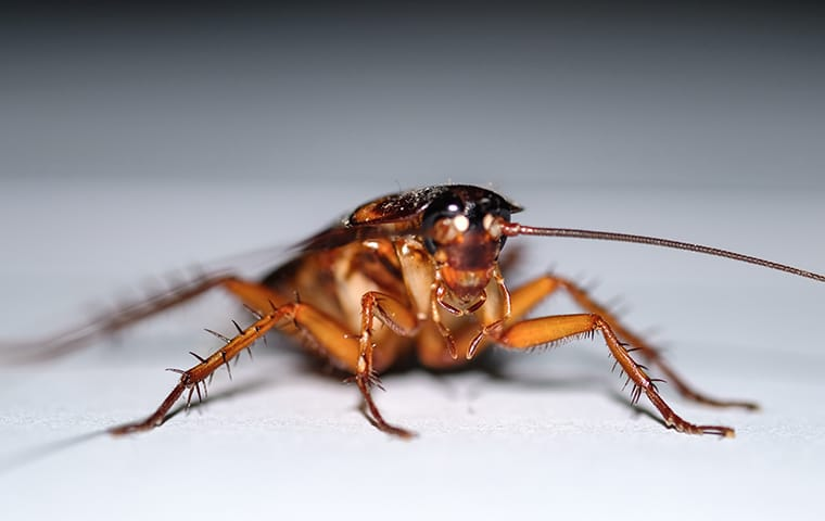 a cockroach crawling in a home
