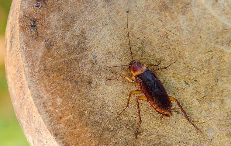 a cockroach outside a home