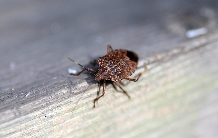 a stink bug crawling on a porch