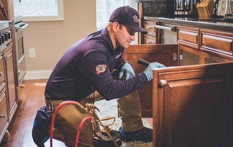 a pest technician inspecting a kitchen cabinet