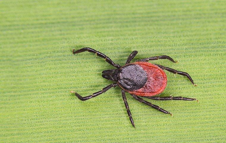 a tick on a plant outside of a house