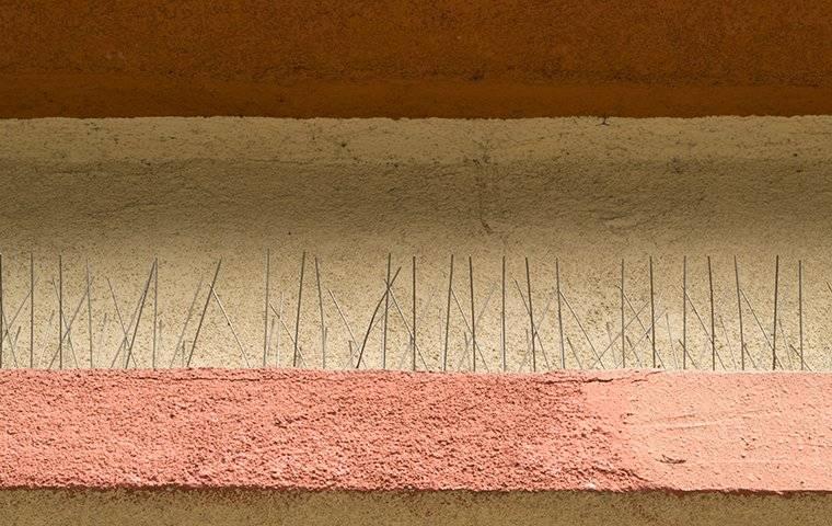 bird spikes on a building