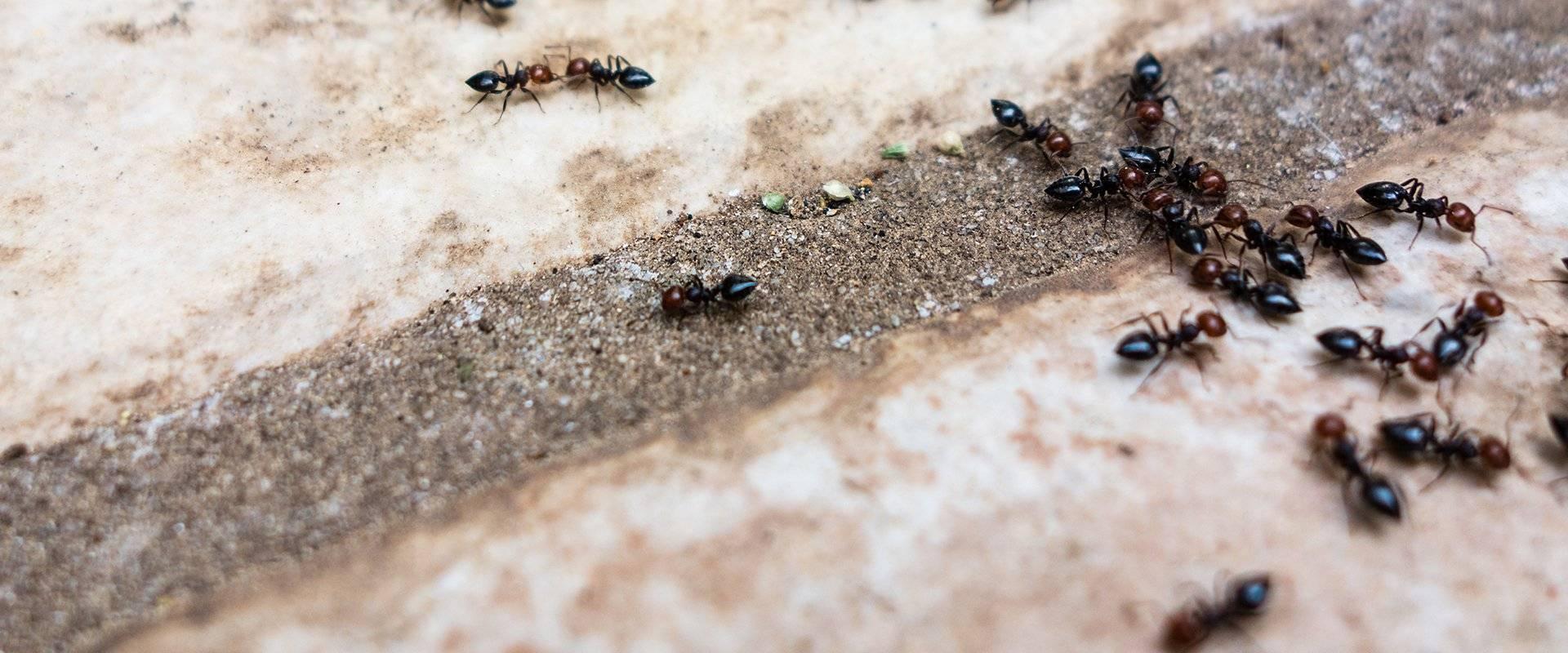 ants outside on a walk way