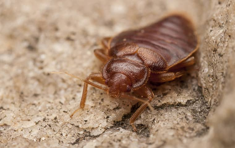bed bug control in enoree