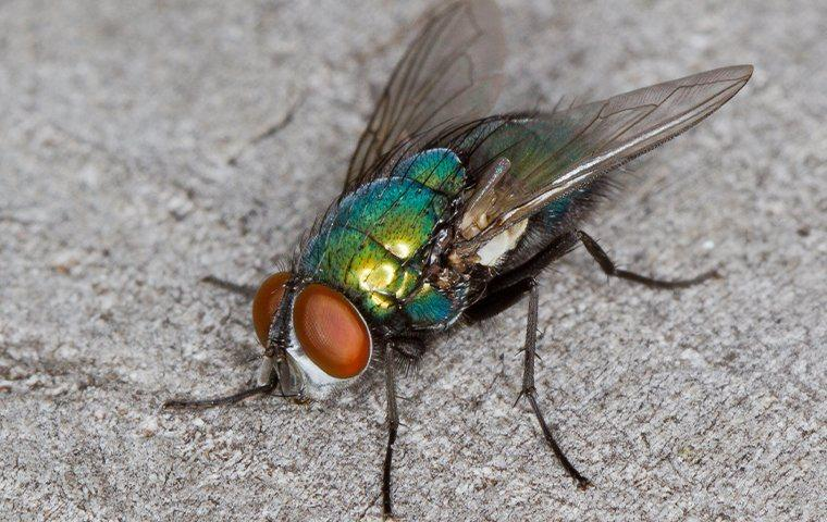a house fly on a new york kitchen counter