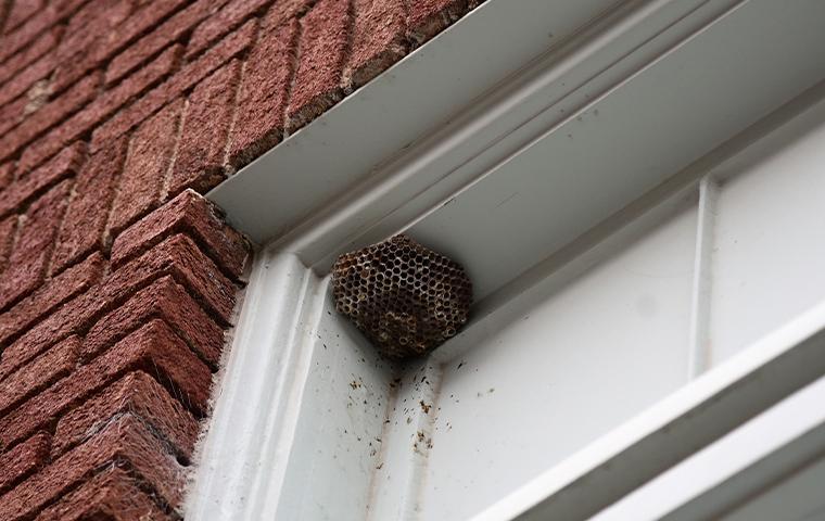 hornets nest on house