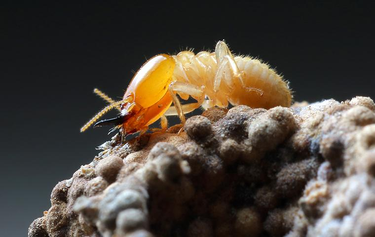 close up of termite on mound