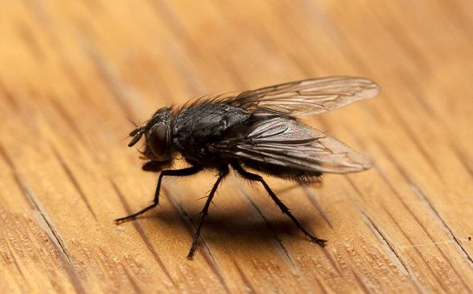 house fly on kitchen table