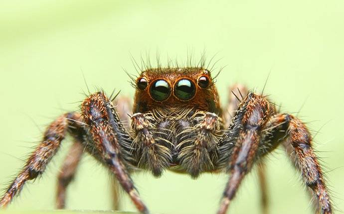 an up close image of a jumping spider